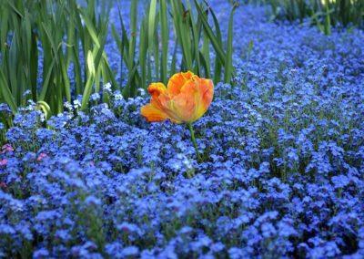 blue-1379492_640